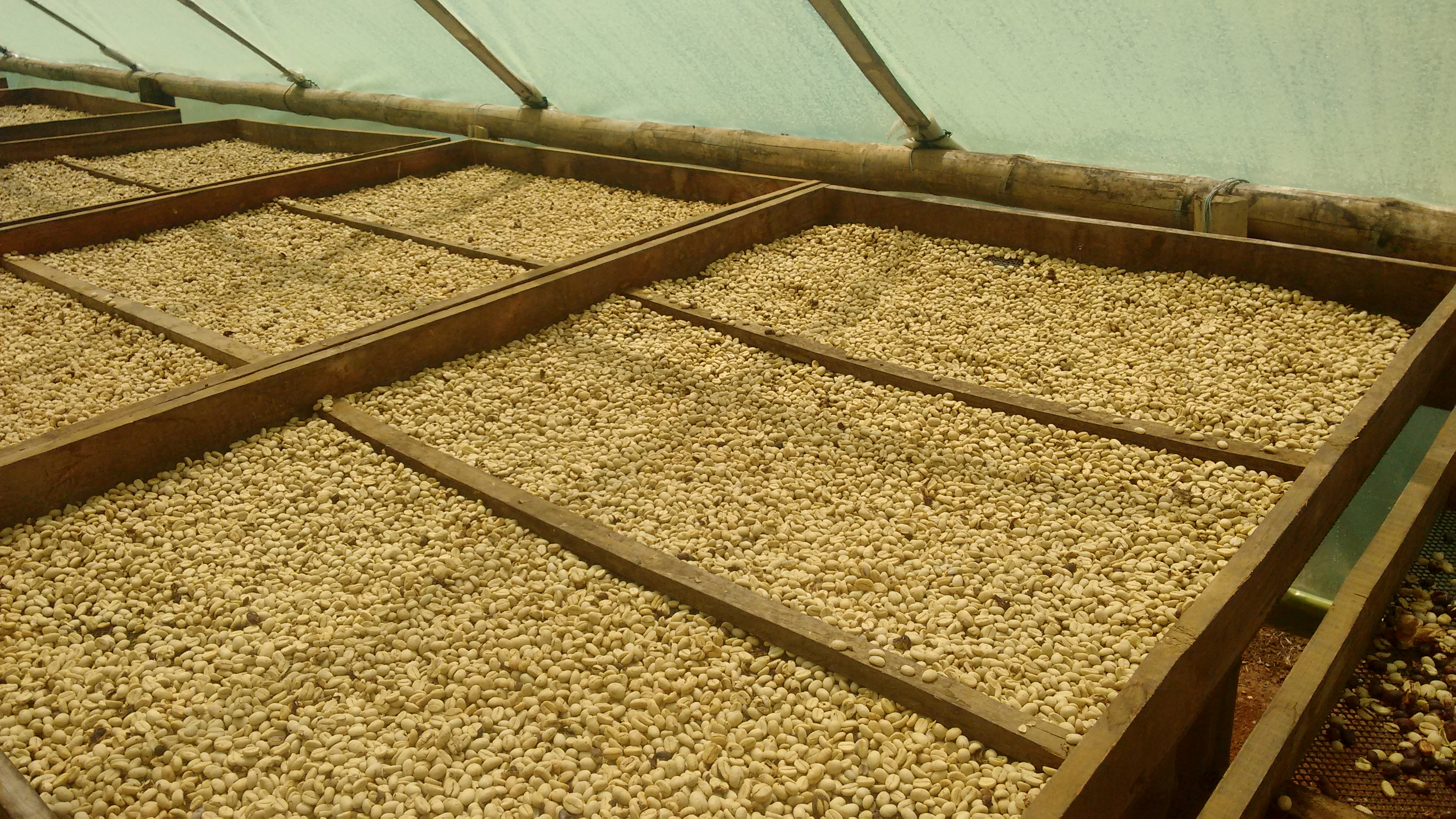 Drying our high quality washed Arabica coffee in Colombia. Directly imported from producers in Colombia.