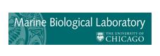mbl-logo.png