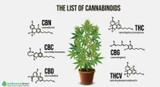 Let's Talk About Cannabinoids