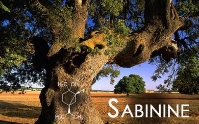 Terpene Tuesday : Sabinine