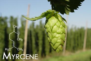 Terpene Tuesday : Myrcene