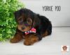 4169-Leo Adopted
