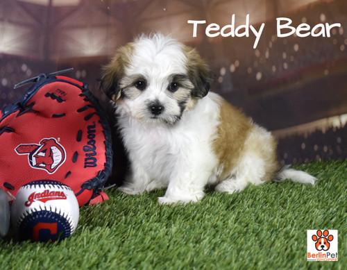 Buddy Bear Puppy