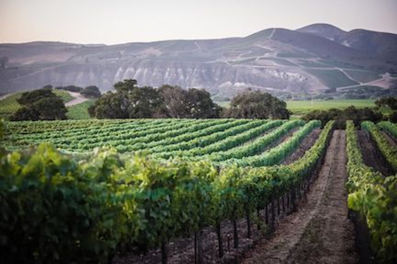 The Best Pinot Noir AVA in CA?
