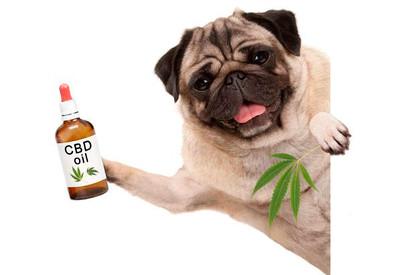 How CBD Treats Can Benefit Your Pet