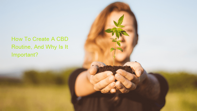 How To Create A CBD Routine, And Why Is It Important?