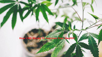 How CBD Works To improve Your Health?