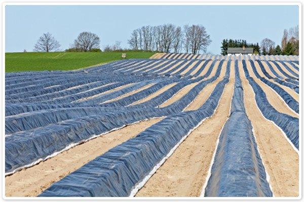 Uses for Tarps - Farming 2