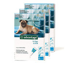 Advantage for Dogs 11-20 lbs (4.1-10 kg) - Aqua 12 Doses