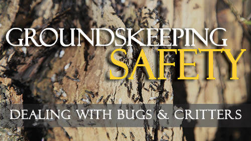 Groundskeeping Safety: Dealing With Bugs & Critters