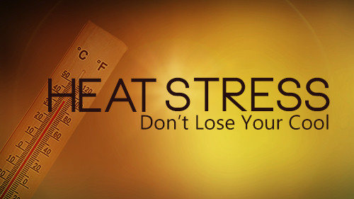 Heat Stress: Don't Lose Your Cool