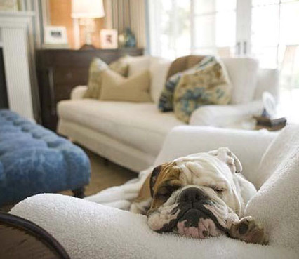 Three Ways of Removing Pet Hair from Your Furniture