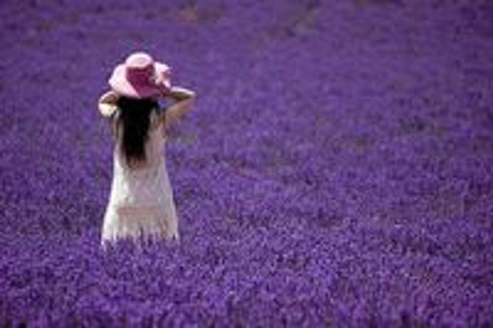 The Love of Lavender