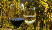 Natural Wines to Try