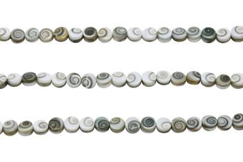 Shiva Eye Shell AAA Grade Polished 6mm Coin - Double Sided