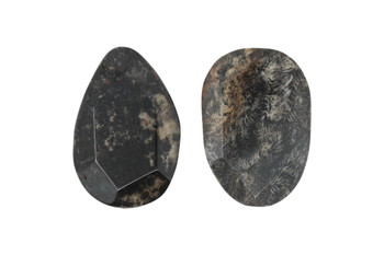 Fossil Coral Agate Polished 34-55mm Faceted Oval