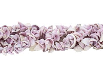 Cebu Beauty Shell 8-12mm Natural Spiral