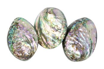 Abalone 60x40mm Whole Shell