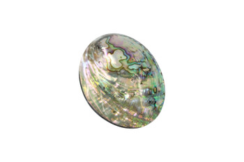 Abalone 60x40mm Whole Shell