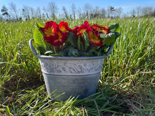 Galvanised Zinc Planter Pot Bowl With Handles