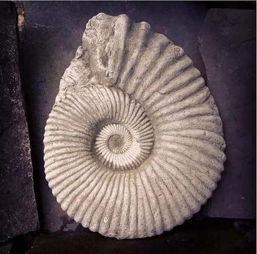 Stone Ammonite Fossil Garden Ornament Statue