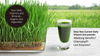 ORGANIC WHEATGRASS POWDER (1 lb.) Buy 2 for free shipping