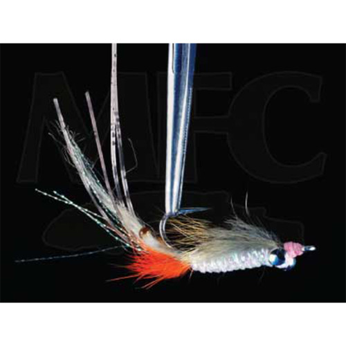 Bachman's Spawning Shrimp #618945
