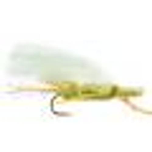 CHUBBY CHERNOBYL OLIVE 0827055