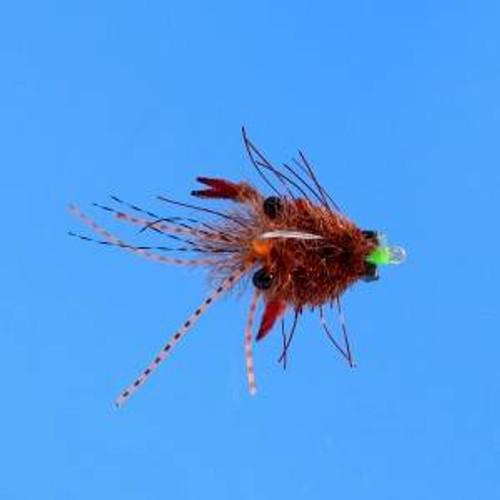 Tarantula Crab Mottled Brown 134423