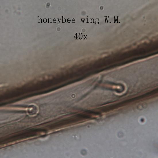 5 Prepared Microscope Slides Specimen Set, Plant and Animal Cells