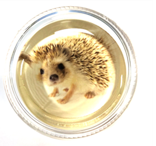 Magic Rosin- Harriet the Hedgehog (HDG)