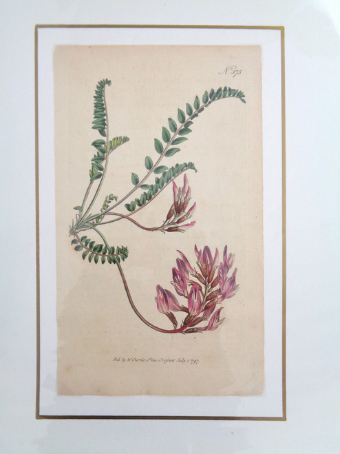 William Curtis Hand-Colored Botanical Print #375