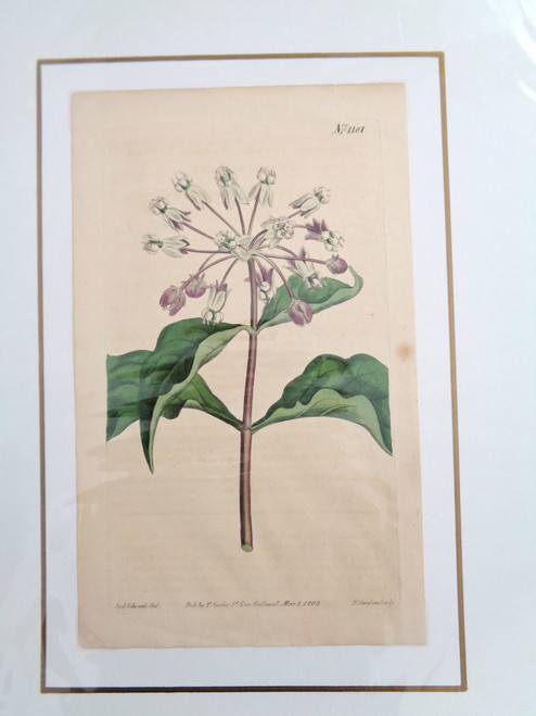 William Curtis Hand-Colored Botanical Print #1181