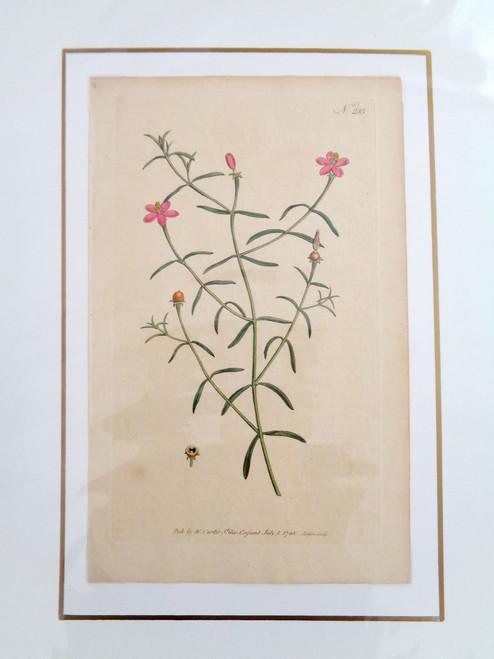 William Curtis Hand-Colored Botanical Print #233