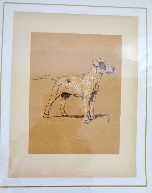 "Cecil Aldin A Dog Day Print; ""Dog with Black Patch on Eye"""