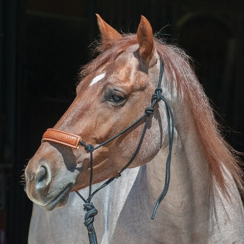 Leather Noseband Halter with Lead