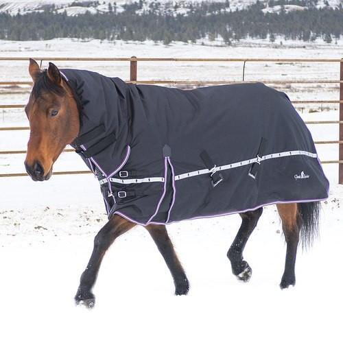 10K Cross Trainer Hooded Blanket