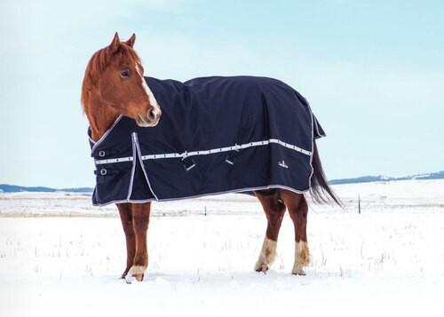 10K Cross Trainer Standard Blanket