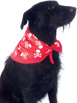 Pirate Pet Bandanna With Skull and Crossbones
