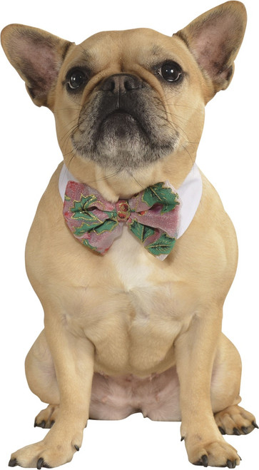 Pet Poinsetta Bow Tie