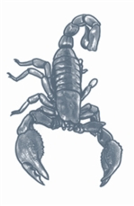 Scorpion Prision Temporary Tattoo