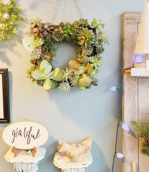 Live Succulent Wall Hanging