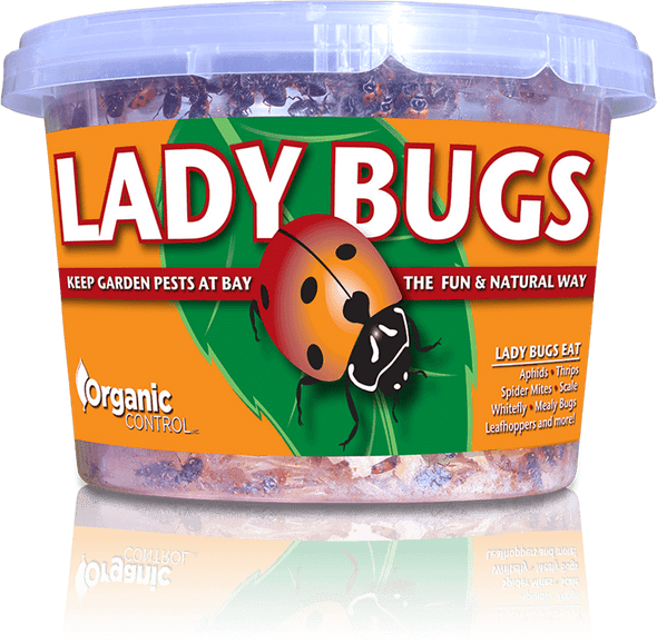 Orcon Lady Bugs (Delivered To Your Door)