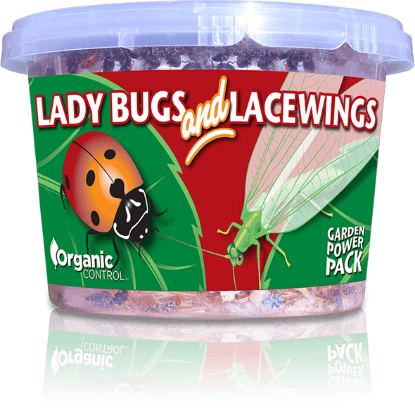 Orcon Green Lacewings (Delivered To Your Door)