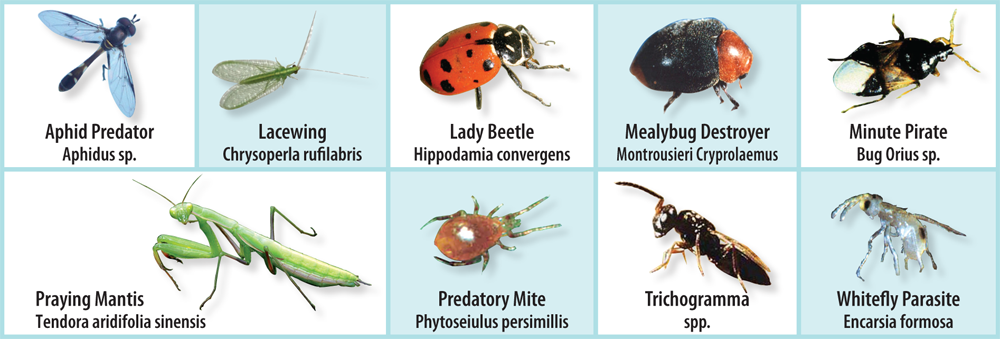 beneficialinsects.png