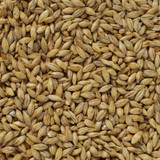 Acidulated Malt Grain