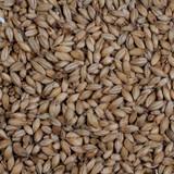 Maris Otter Pale Malt Grain