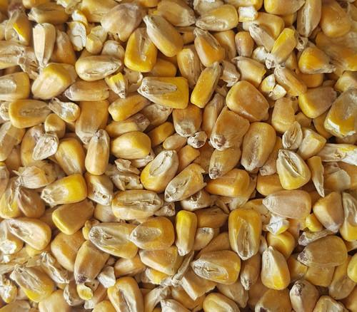 Maize Malt (Gladfield)