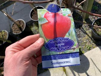 Apple Summer Red