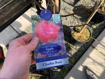 Apple Charles Ross